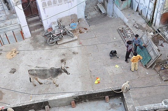 Typical alley: a cow, a monkey, a dog...