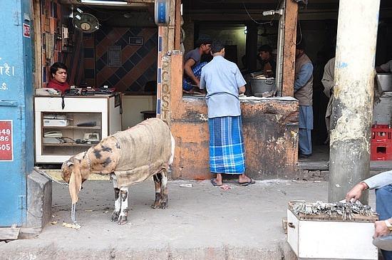 Goat parking at the sidewalk
