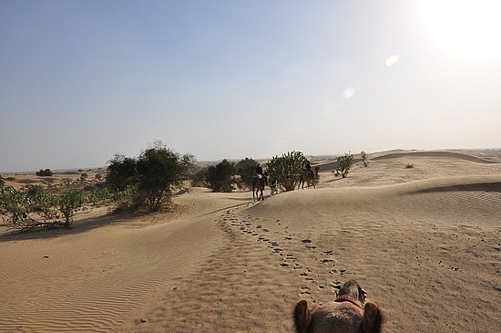 From a camel's perspective