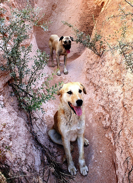 Cappadocia Companions
