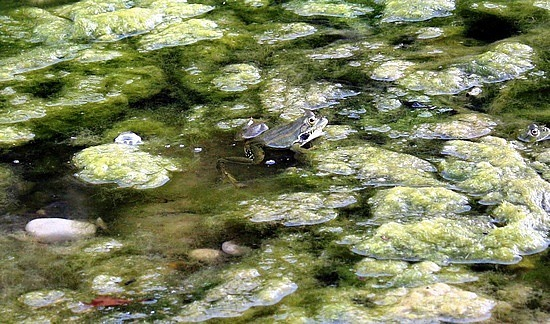 Olympus froggie