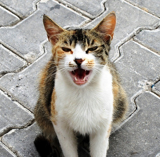 Cappadocia Meow