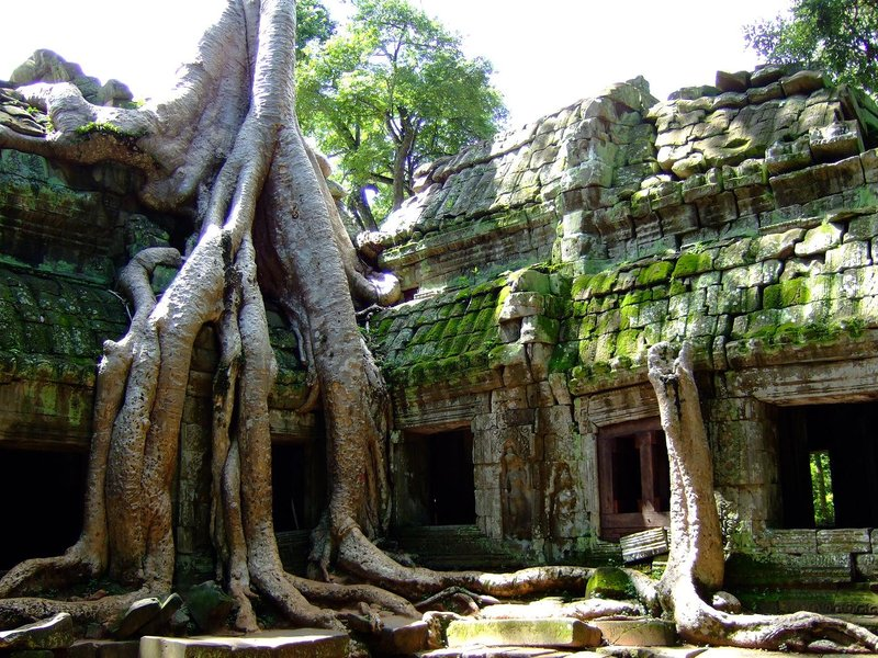 Tree growing over Ta Prohm temple