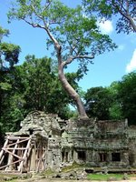 Ta Prohm: Apparently Angelina Jolie ran around here in the filming of