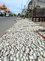 Fish drying on the street in Vung Tao