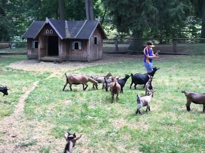 Hungary Goats