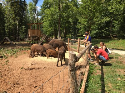 Boar in Wildlife Park