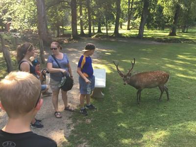 Deer in Wildlife Park
