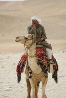Bored camel guy, Giza