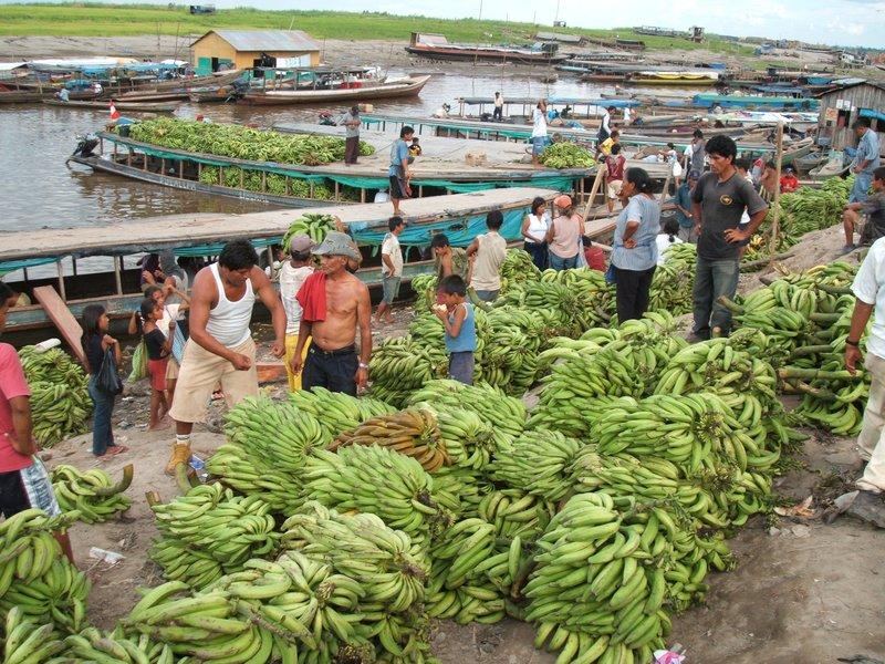 Bananas to market