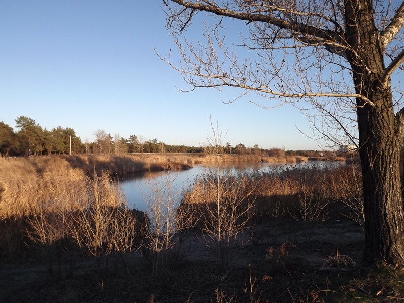 Nice winter weather, Park Lake, December 2020