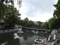 Swans' Lake