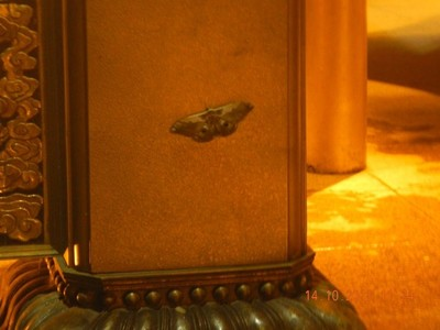 night butterfly on the bell tower
