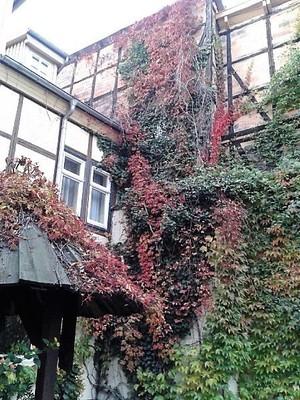Germany - Harz - Quedlinburg, Hotel Garni Adelheid-inner court