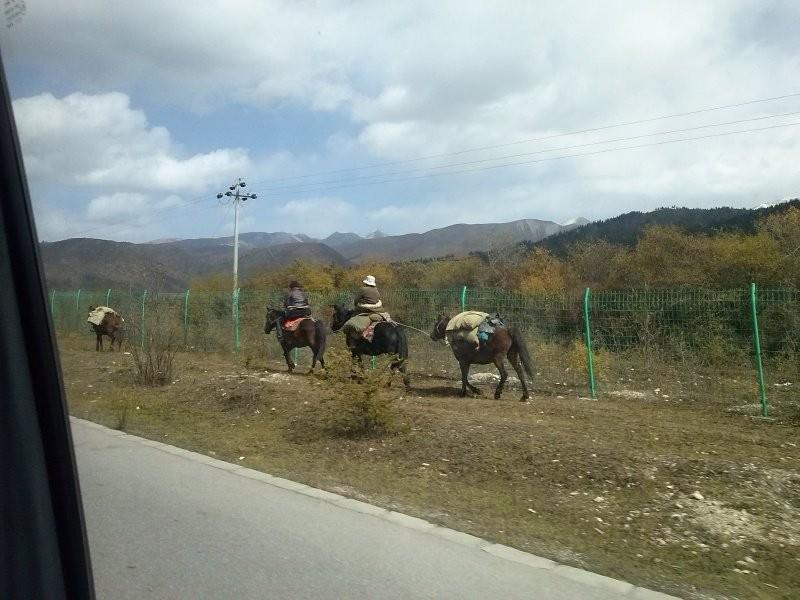 On the way to Zhangzhazhen - Tibetan horsemen