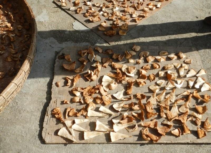 Zhongcha village - air dried local mushrooms
