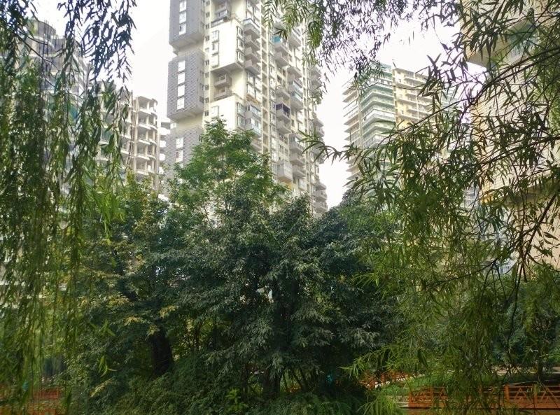 Chengdu - green neighbourhood at Century City