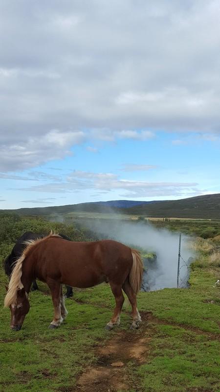 Iceland, Reykholt