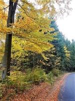 Germany - Harz - Brocken - between the villages of