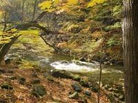 Germany - Harz - deep inside Bodetal canyon