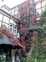 Germany - Harz - Quedlinburg, Hotel Garni Adelheid-inner court
