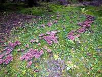 Germany - Harz - Elend and Sorge - mushrooms