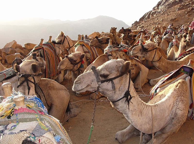 camel parking lot