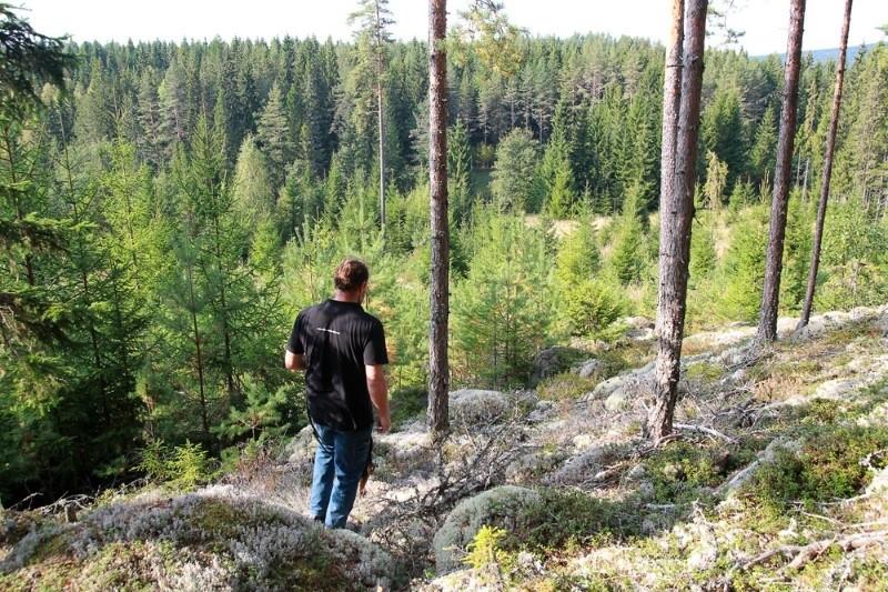 Forrest hike