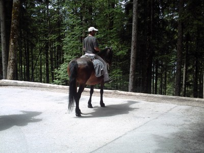 NEUSCHWANSTEIN,  GERMANY..   On  the  walk  up  to  near  castle.  --  2  or  3  horse  riders  taking  a rest