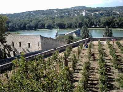 AVIGNON  FRANCE..    Part of  vineyard of  the  Popes.with  Pont St-Benezet.