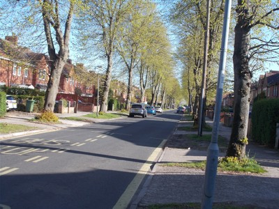 AVENUE OF LIME TREES NEAR MY HOME.  Just in new leaf.