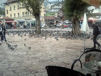 SARAJEVO.  Bascarsija  Square. --    I would  call it  Pigeon Square !