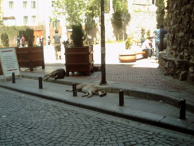ISTANBUL  TURKEY.   .  Let sleeping dogs lie. .