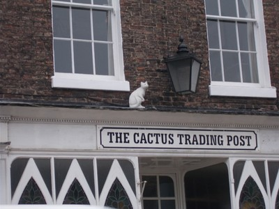 WHITE CAT WITH OLD GAS  LAMP IN GILLYGATE