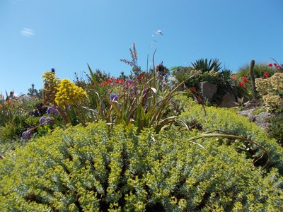 MINACK THEATRE.  Gardens.