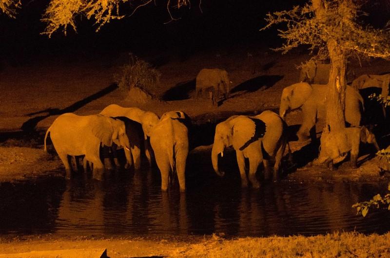 Senyati Camp Elephants