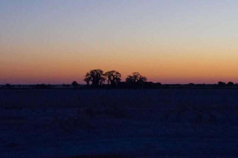 Sunrise Over Baine's Baobabs