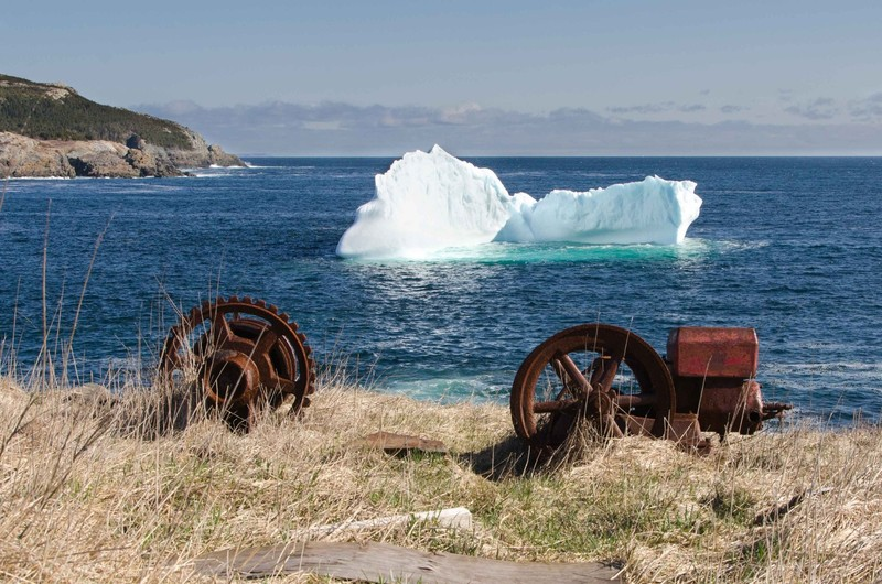 Iceberg in the Cove