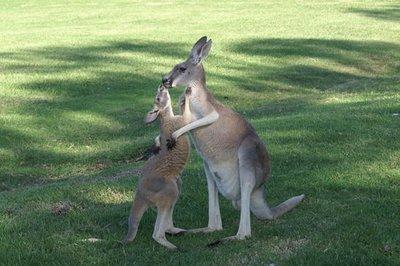 australia_..ict0192.jpg