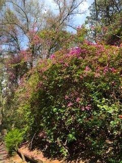 Flores de Bosque los Colomos
