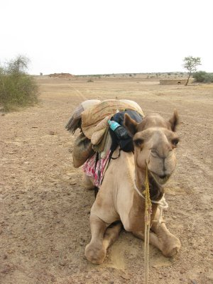 Camel_Safari_005.jpg