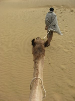 Camel_Safari_100.jpg