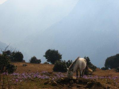 Everest_Ba..rek_180.jpg