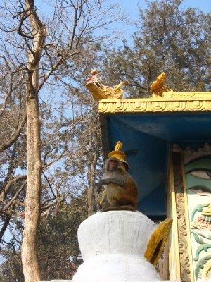 Kathmandu_068.jpg