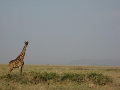 Safari_221.jpg