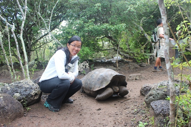 Giant tortoise on San Cristobal