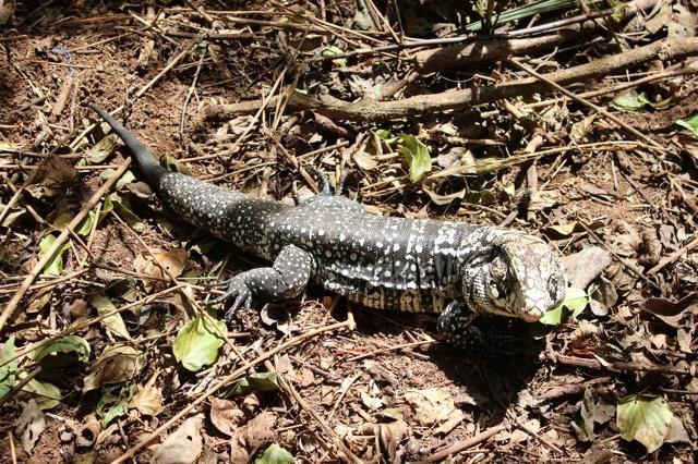 Iguazu wildlife