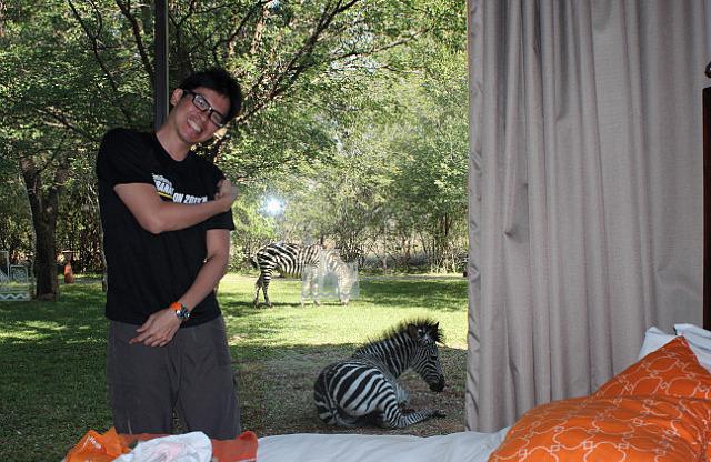 Zebra chilling outside our room