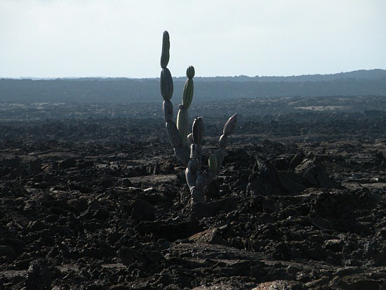 Not much life on the lava