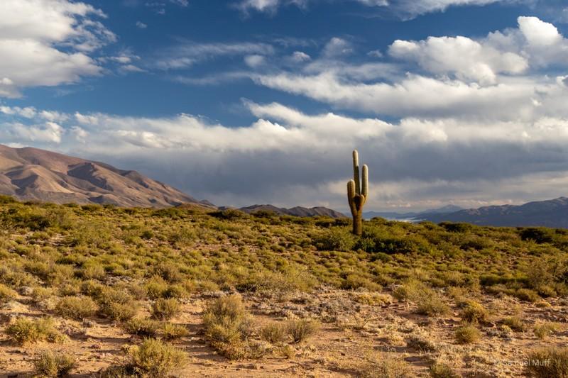 Lonely cactus in the Quebrada de Humahuaca